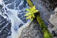 Ökade utsläpp till miljön på grund av miljölagstiftningen
