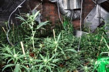 Two men sentenced to total of five years in jail in connection with cannabis cultivation in Litherland