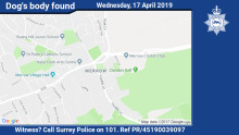 Witness appeal following discovery of dog's body in Merrow