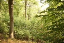 SAUBER-Waldpreis fördert gemeinnützige Waldprojekte mit 9.000 Euro
