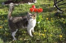 Farliga växter för katten