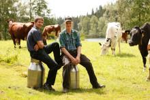 Källsjö Mejeri - Sveriges minsta mjölkmejeri