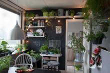 Krukväxter ger sundare inomhusmiljö