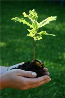 Plantering av klimatträd i Lund