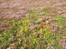 Urbangreen bygger Miljötak på Arlanda