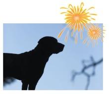 Snart smäller det - så hjälper du ditt djur vid stress