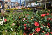"""""""Kiel blüht auf!"""" mit verkaufsoffenem Sonntag (28.-29. April 2018). Ein farbenfrohes Blumenmeer zum Innenstadtfest!"""