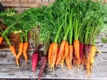 Mer ska bli mat – nu ska livsmedelsförluster och resurser följas upp