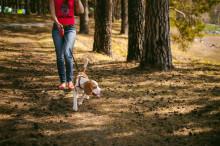 Länsstyrelsen Skåne uppmanar hundägare att följa koppeltvånget
