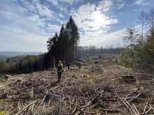 BPW pflanzt mehr als 30.000 Bäume im Bergischen Land