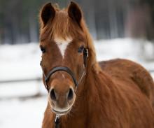 Så hjälper du din rädda häst på nyår