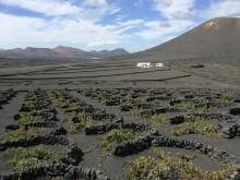 TUI Care Foundation starter økologisk vinprojekt på Lanzarote