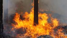 Väderstationer i skogen ska hindra bränder