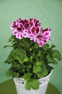 Månadens blomma – mars 2010