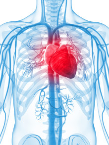 A new clinical trial shows that daily intake of Calanus® Oil improves cardiac function and insulin sensitivity