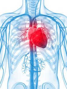 Nytt klinisk forsøk viser at daglig inntak av Calanus® Oil gir forbedring av hjertefunksjon og insulinfølsomhet.