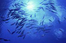 Våra hav, vår framtid – men även vårt ansvar