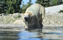 Von der Bärenburg zum Polarium - für den Rostocker Zoo bricht eine neue Ära a