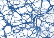 Synapsen im Schnelldurchgang screenen