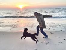Wau – Hundstage auf Sylt