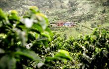 Nespresso lanserer sin første Fairtrade-kaffe