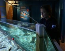 Fiska på Havets Hus