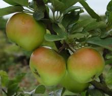 Frukt! på Fredriksdal