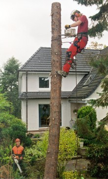 Auch im eigenen Garten ist nicht alles erlaubt: Fällarbeiten durch Baumschutzsatzungen geregelt