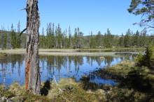 Fjällnära skog inventeras