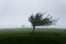 """Sturm """"Sabine"""" richtet Schäden in Höhe von 675 Millionen an"""
