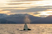 A Essência do Ártico