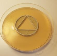 Nytt snabbtest visar hur antibiotika samverkar för att döda bakterier