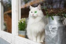Firmware-Update für RX10 IV bringt Augenautofokus für Tiere in Echtzeit