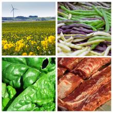Hur kan offentliga kök ersätta köttet i maten?