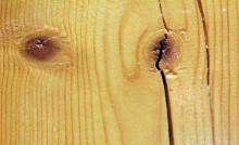 Träkonferens lockar utländska forskare till Skellefteå