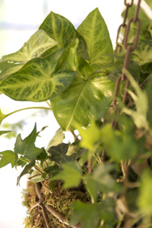 Gröna växter – mer än bara grönt