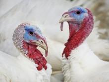 Nytt fall av fågelinfluensa i Skåne