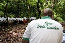 Avskogning ökar global uppvärmning