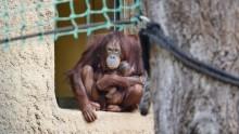 Dinda und ihr Baby - das erste Video und weitere Fotos