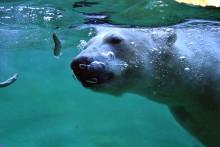 Spitzenposition behauptet und ausgebaut – der Rostocker Zoo ist die Nr. 1 im europäischen Zoo-Ranking (Kategorie B)