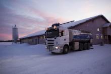 Norrmejerier höjer betalningen till bönderna - Vi måste trygga tillgången på norrländsk mjölk
