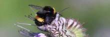 Urbangreen och Bee Urban krokar arm för ökad biologisk mångfald