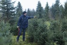 Mit Axt und Säge in den Wald