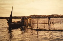 Celebrating 50 years of modern aquaculture