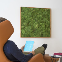 So klingt Natur: Pflanzen- und Moosbilder mit Audio-Technik von WHD