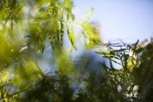 Bydel Stovner deler ut midler til grønne tiltak