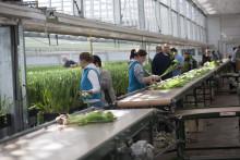 Högsäsongen nalkas för svenska prydnadsväxtodlare, men Corona hotar försäljningen