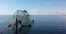 Sälsäkra redskap kan bidra till ett bärkraftigt kustfiske