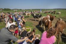 Dags för sommarbete hos Norrmejeriers mjölkbönder i Norrbotten