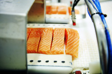 Norwegian salmon exports on the rise